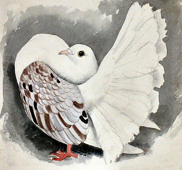 Demikian Sekelumit Mengenai Fancy Pigeon Di Indonesia Dan