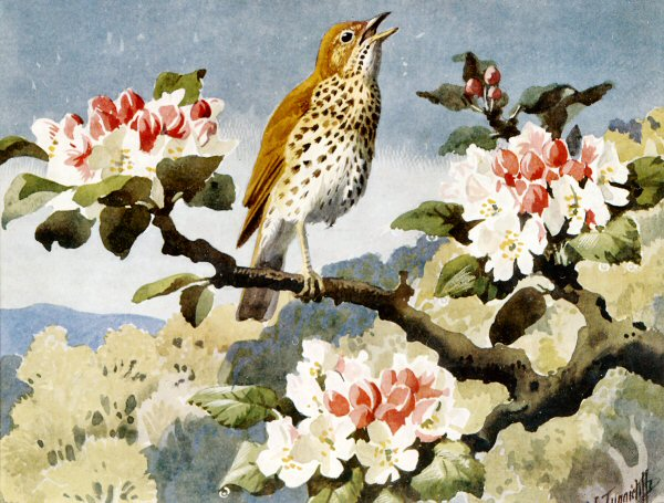 Tunnicliffe society greetings cards charles tunnicliffes artwork has been used by royle medici the rspb and several other companies and organisation for their greetings cards m4hsunfo